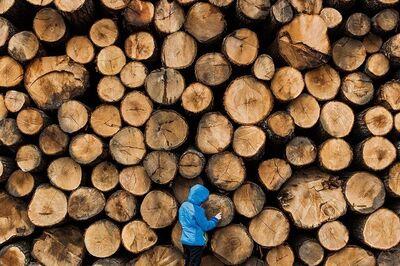 Jesse Burke, 'Lumberjack', 2014