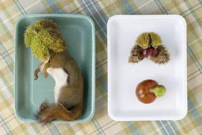 Kimberly Witham, 'Still Life with Red Squirrel and Chestnuts', 2012