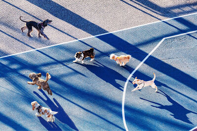 Mitchell Funk, 'Dogs Running In Park With Early Morning Light, New York City', 2021