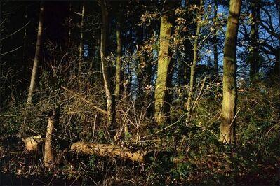 Justin Partyka, 'Oak and Fir, Suffolk', 2011