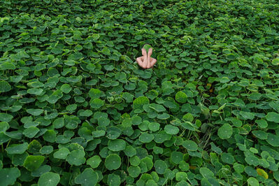 Honey Long & Prue Stent, 'Nasturtium II', 2014