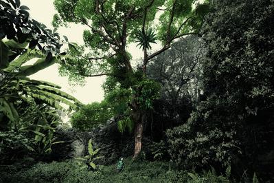 Robert Zhao Renhui, 'Durian Tree, Bukit Panjang. Teo Teah On, 66, carpenter.', 2015