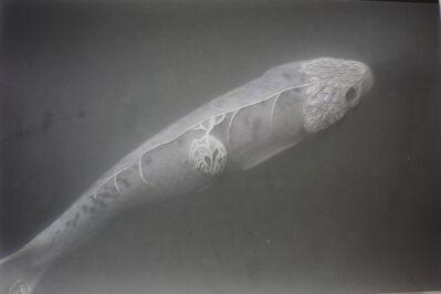 Juliette-Andrea Elie, 'Et aux yeux des poissons, les larmes perlent (I)', 2016