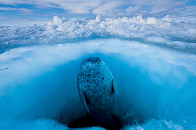 Paul Nicklen, 'Natures Window (Seal)', 2006