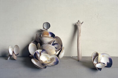 David Halliday, 'Clam Shells', 2007
