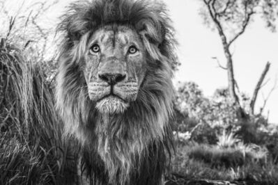 David Yarrow, 'Kingdom', 2019