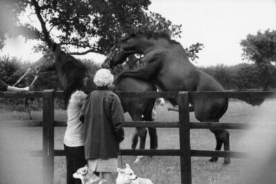 Alison Jackson, ' The Queen Watches Her Horses Mate', 2014