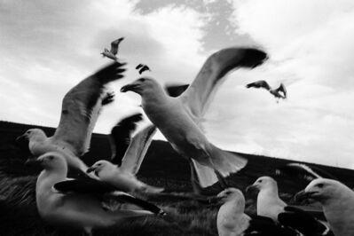 klavdij sluban, 'Jours heureux aux îles de la Désolation', 2012