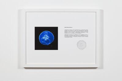 Patrick Bérubé, 'Tarritopsis Nutricula', 2018