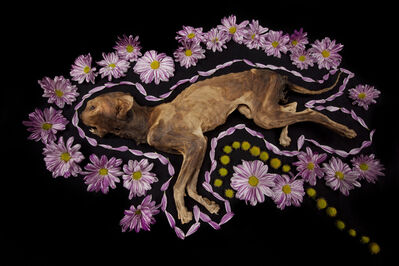 Bobby Neel Adams, 'House Cat #4', 2016