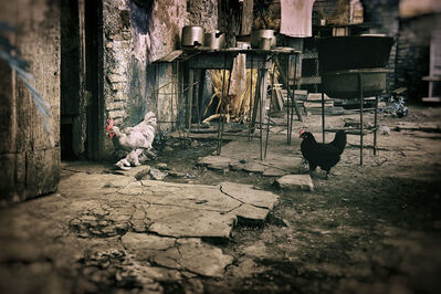 E.K. Waller, 'Roosters in the Kitchen', 2013