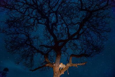 Steve Winter, 'Leopard under the stars', August 24-2014