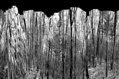 Caroline Savage, 'Forest, Interrupted 5', 2018