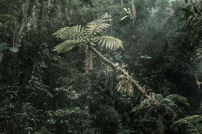 Luciano Candisani, 'Floresta Amazônica', 2016