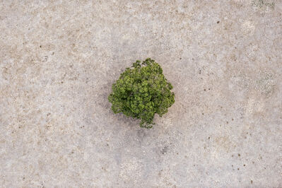 """Zoe Wetherall, '""""Single Tree"""" Contemporary Abstract Aerial Landscape (Color Photograph)', ca. 2018"""