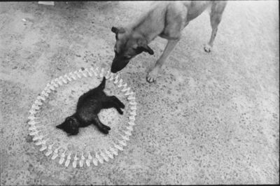 Antoni Miralda, 'Requiem pour un chat mort #1', 1969