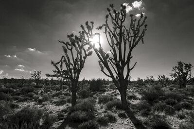 Christopher John Brown, 'Evening Light, Mojave Desert', 2014