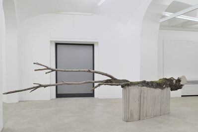 Stefano Canto, 'Rp 11, (Quercia, Piazzale del Verano, Roma)', 2021
