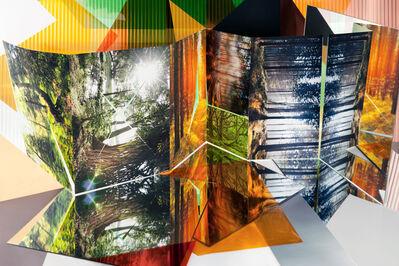 Anastasia Samoylova, 'Forests', 2014