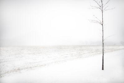 Jack Spencer, 'Snow Tree ', 2019