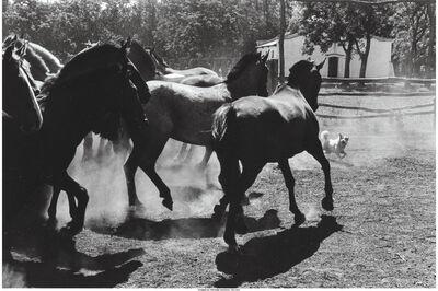 Elliott Erwitt, 'Untitled, Argentina from Son of a Bitch', 1972
