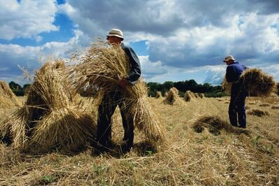 Justin Partyka, 'Harvest, Suffolk', 2007