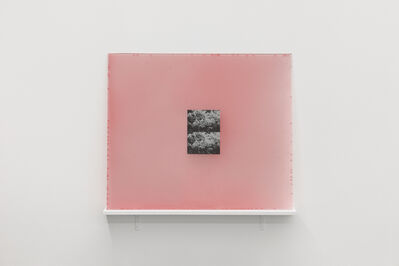 Manuela de Laborde, 'Parte de una película fijada en el color de alguna flor', 2020
