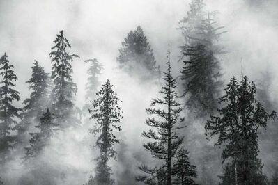 Cristina Mittermeier, 'Foggy Trees', 2016