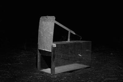 Tom Callemin, 'Cage', 2013