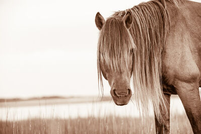 LISA CUEMAN, 'Wild Man - Wild Horses of the Outer Banks', 2013