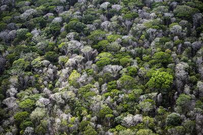 Daniel Beltrá, 'Amazon pristine canopy (#220)', 2017
