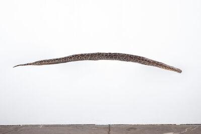 Julius von Bismarck, 'I like the flowers (snake)', 2018