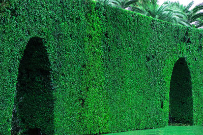 Robert Funk, 'Hedge Fun - Two Arches, Palm Beach - Street Art by the Wealthy', 2020