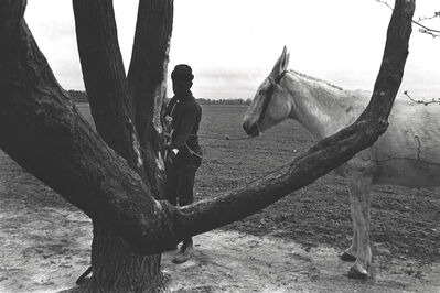Constantine Manos, 'Untitled, Sharecroppers, South Carolina (lone man, tree and white mule)', 1965