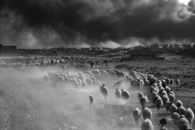 Paolo Pellegrin, 'People fleeing the ISIS controlled zones carry their belongings with them; peasants bring their sheep. Mosul, Iraq,', 2016