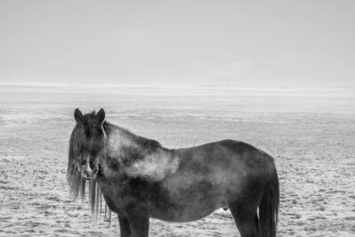 A Yin, 'Spirit of Mongolian Horses #13', 2015