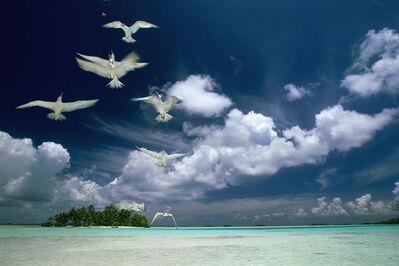 Eduardo Rubio, 'Polynesia Rangiroa Seagulls'