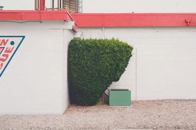 Mike Bayne, 'Green Shrub', 2019