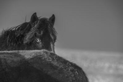 A Yin, 'Spirit of Mongolian Horses #35', 2015