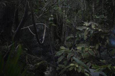 Itamar Freed, 'Jungle', 2017