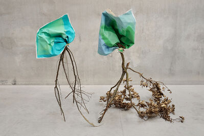 Laura Renna, 'Meconopsis grandis', 2014