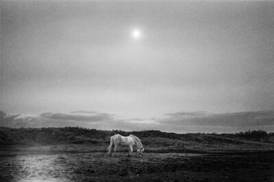 Jehsong Baak, 'Horse in a Field ', 2005