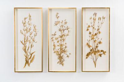 Sophie Coryndon, 'Illuminated Herbarium Triptych, UK', 2019