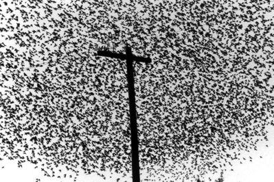 Graciela Iturbide, 'Pájaros con poste, Guanajuato', 1990