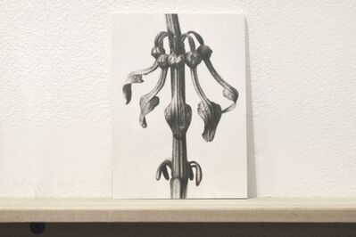 "Martí Cormand, 'Formalizing their concept: Sherrie Levine's ""After Karl Blossfeldt:17""', 2018"