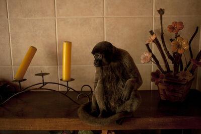 João Castilho, 'Macaco (from the series Zoo) - [Monkey]', 2014