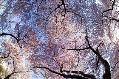 Isack Kousnsky, 'Cherry Blossom', 2015