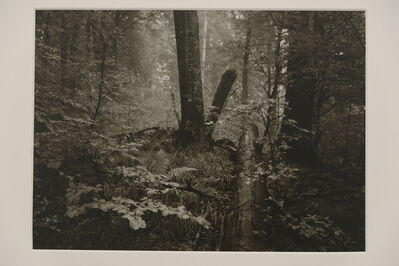Josef Sudek, 'Garden', 1950-1955