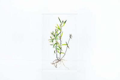 Azuma Makoto, 'Block Flower Seven, Swertia japonica', 2018