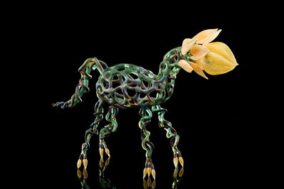 Kathleen Elliot, 'When Plants and Animals Merge, Yellow Toes', 2011